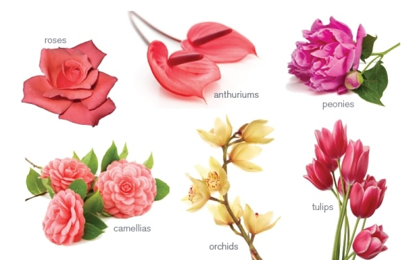 Flower Meanings! Speak the Flowers Language