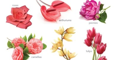 Flower Meanings! Speak the Flower's Language