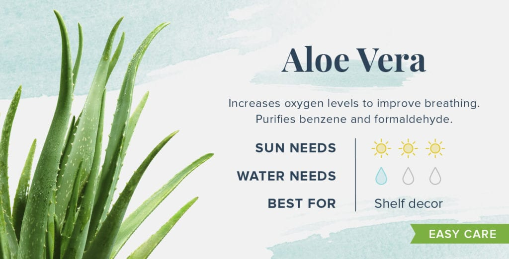Plants That Help You Sleep Better - Aloe Vera