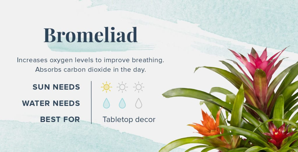 Plants That Help You Sleep Better - Bromeliad
