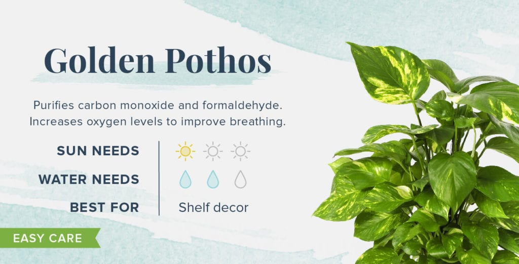 Plants That Help You Sleep Better - Golden Pothos